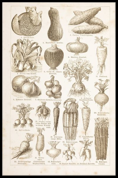 Vegetables Vintage Plakat