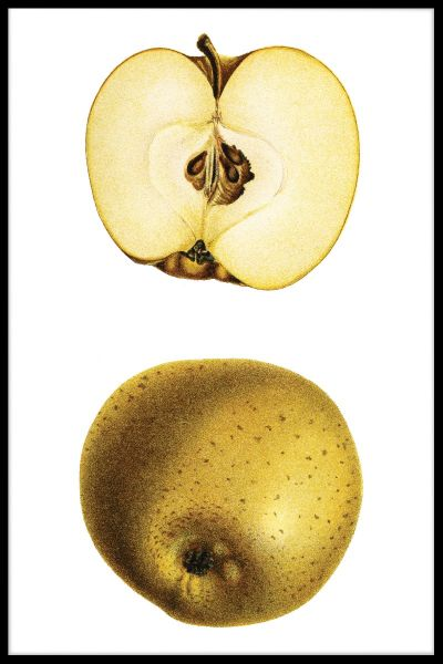 Half Yellow Apple Plakat
