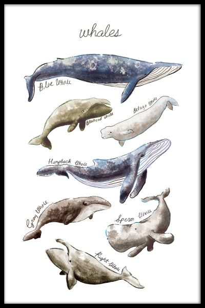 Types of Whales Plakat