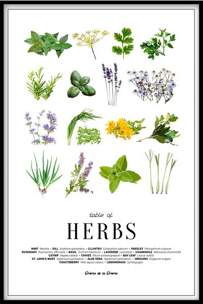 Table of Herbs Plakat