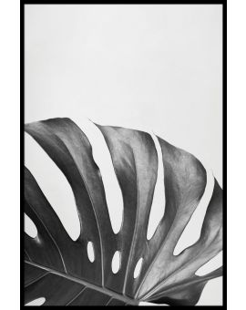 Monstera Deliciosa Leaf Plakat