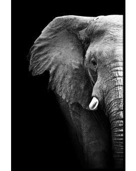 Elephant Portrait Black & White Plakat