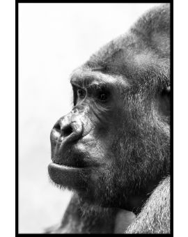 Gorilla Portrait Black & White Plakat