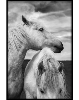 Horses in Scotland Portrait Plakat