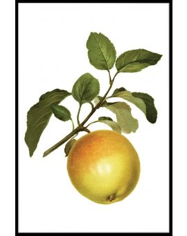 Yellow Apple Plakat