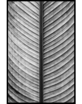 Black & White Palm Leaf Plakat