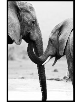 Elephant Mother and Son Plakat