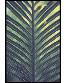 Palm Leaf Green Yellow Plakat