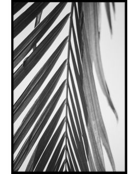 Palm Leaf Black & White N03 Plakat