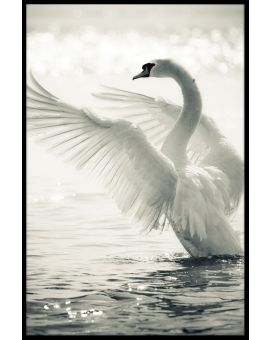 Graceful Swan Plakat
