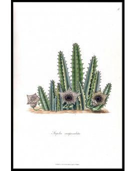 Cactus Illustration N02 Plakat