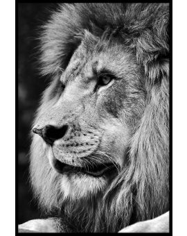 Lion Portrait N03 Plakat