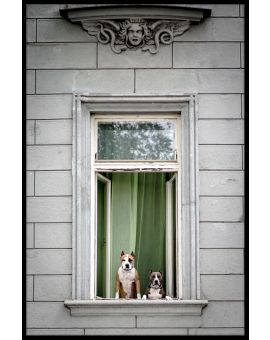 Window Dogs Plakat