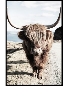 Highland Cattle N06 Plakat