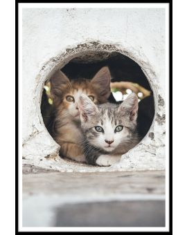 Cats Hiding in Hole Plakat