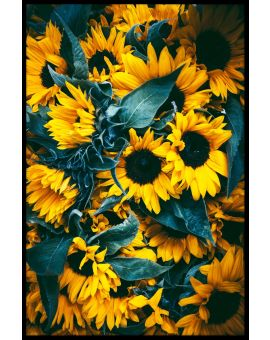 Sunflowers Plakat