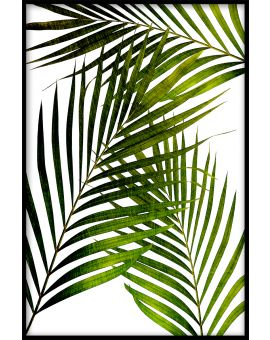 Palm Leaves Plakat