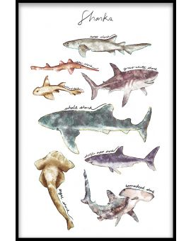 Sharks Collection Plakat