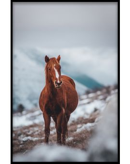 Horse on Mountain Plakat
