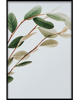 Abstract Botanical N01 Plakat