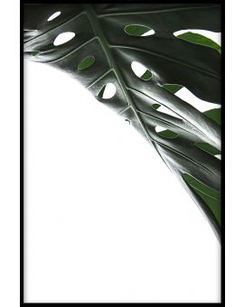 Monstera Close Up N01 Plakat