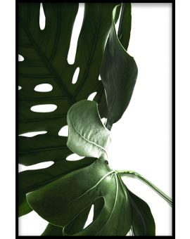 Monstera Close Up N03 Plakat