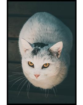 White Cat N02 Plakat